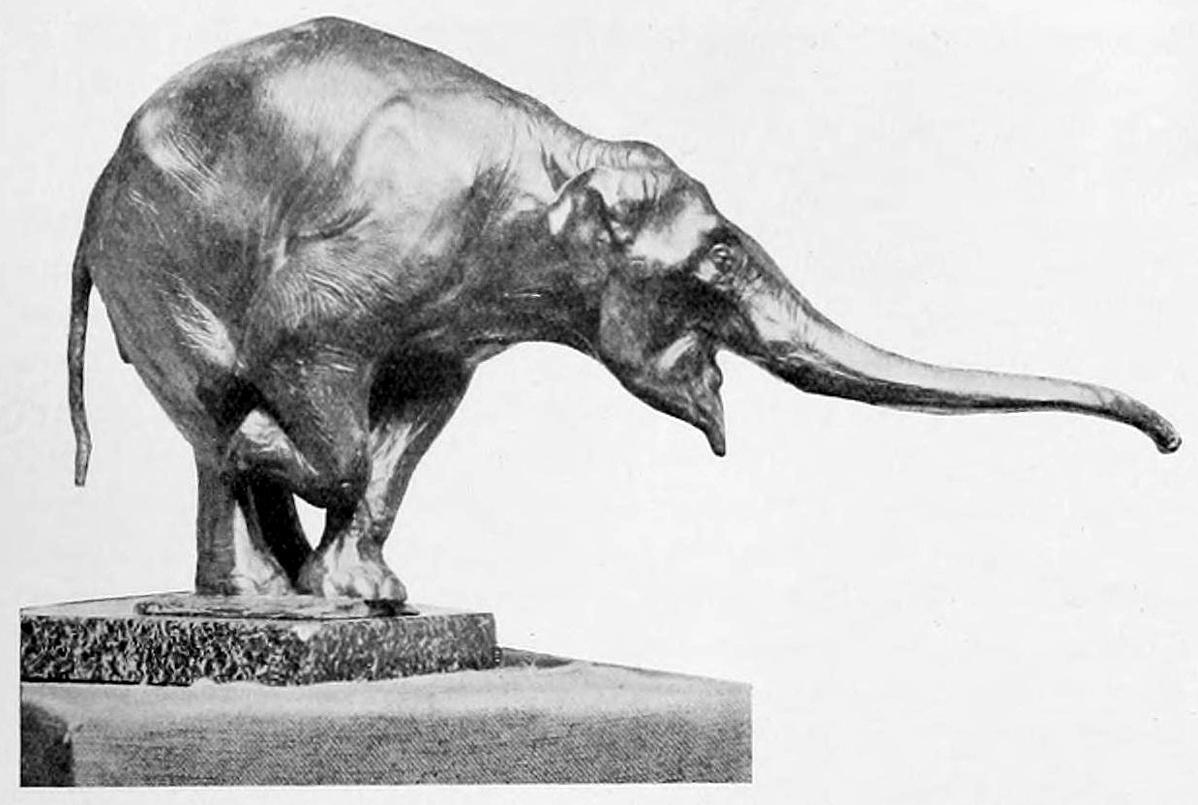 Rembrandt Bugatti: Ázsiai elefánt (illusztráció)