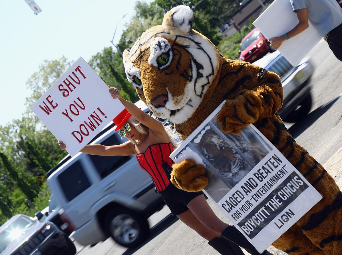 A PETA állatvédelmi szervezet a cirkusz bezárásáért tüntet