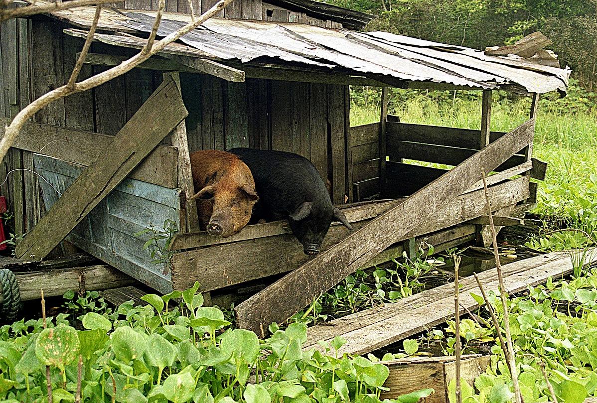 Amazonia-155021.jpg