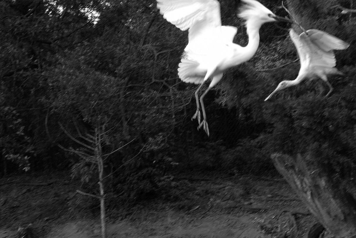 sylvia_plachy_cranes-134927.jpg