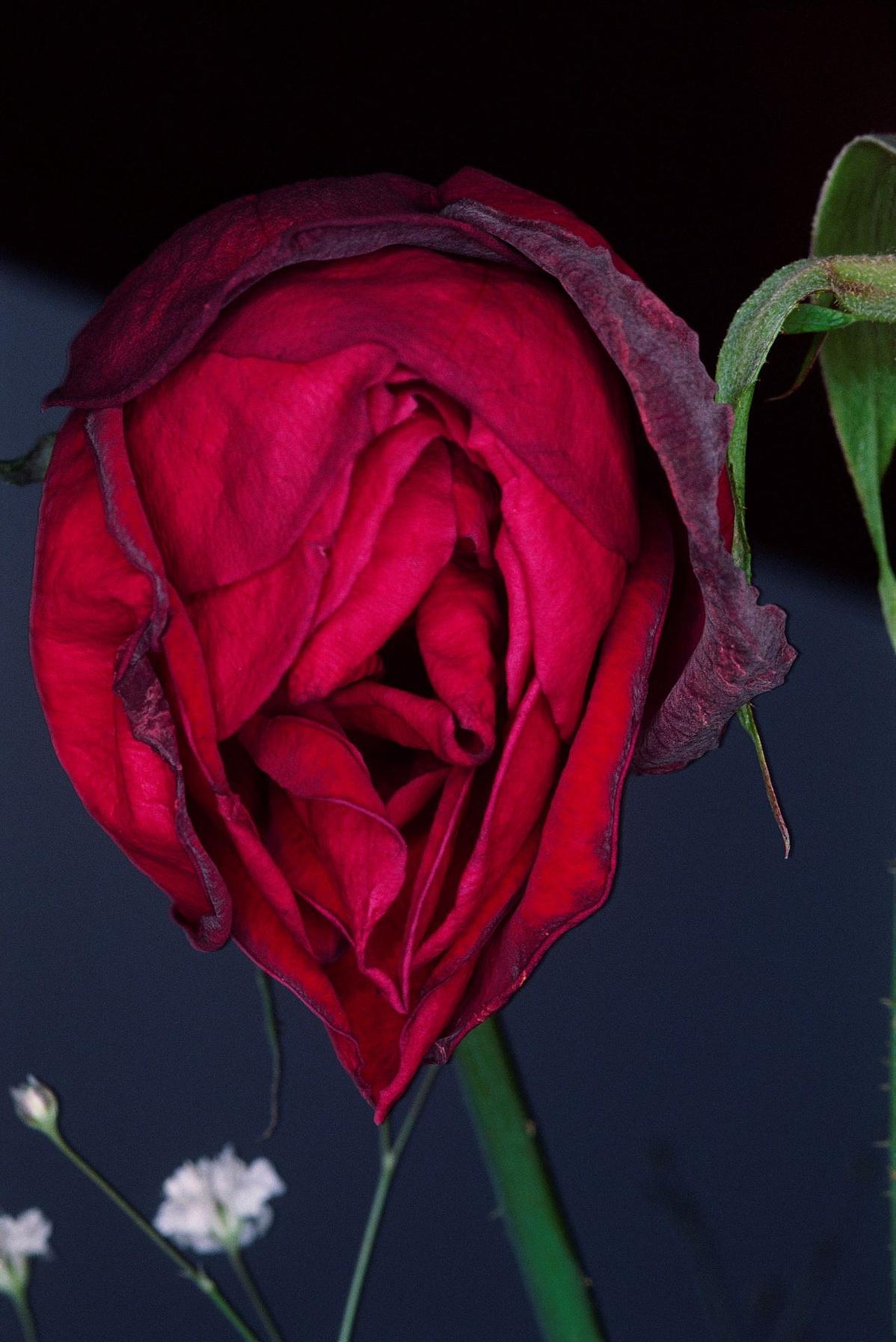 Flower1-120735.jpg