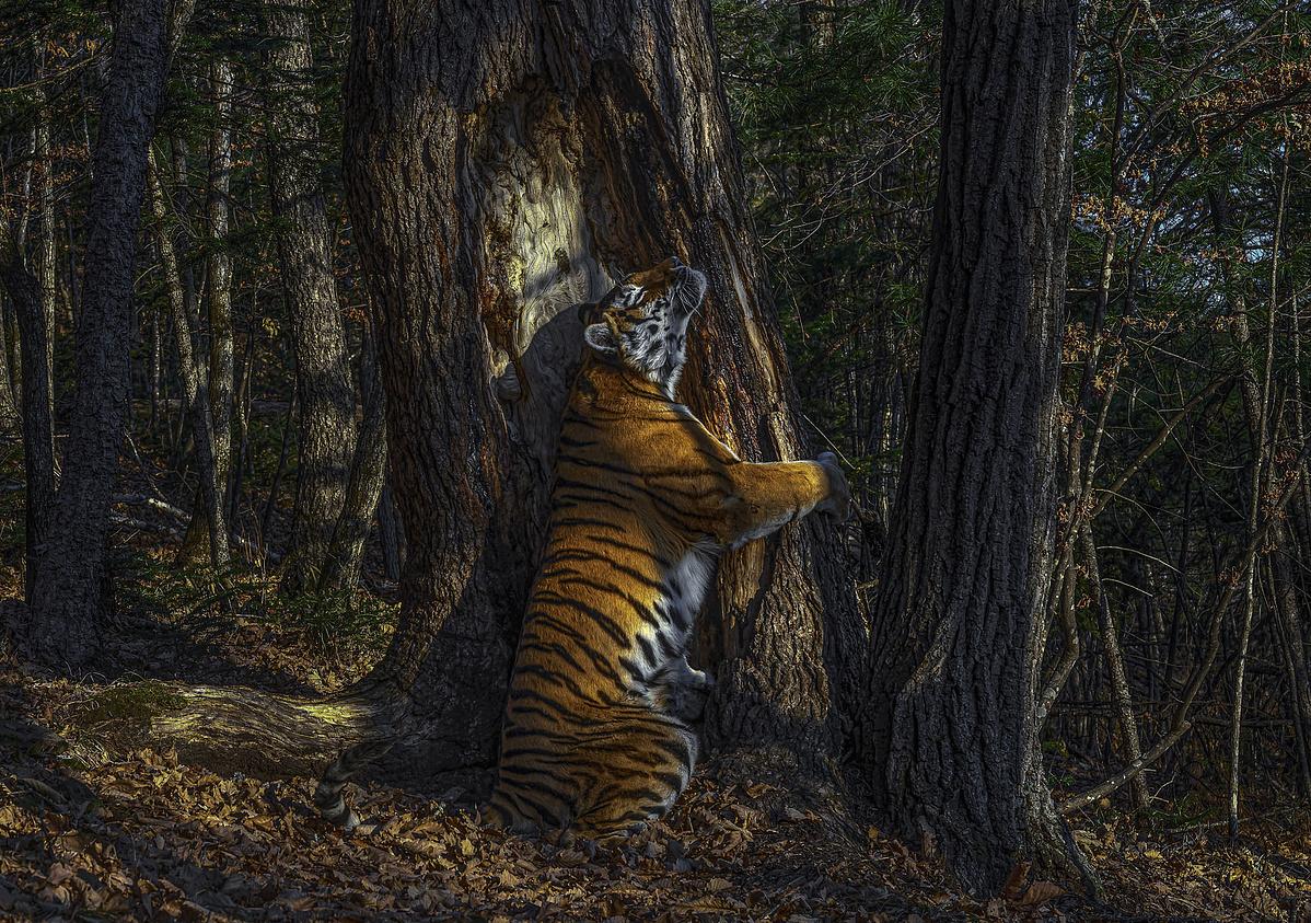 tigris-100043.jpg