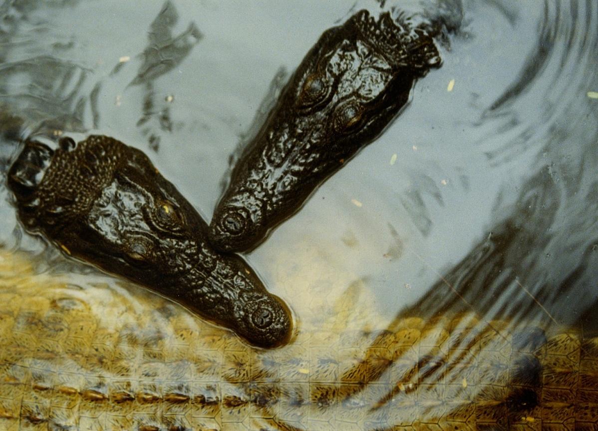 KrokodilfarmMombassa2003-132227.jpg